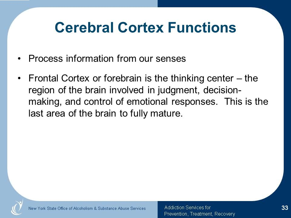 Cerebral Cortex Functions Process information from our senses Frontal Cortex or forebrain is the thinking center – the region of the brain involved in judgment, decision- making, and control of emotional responses.