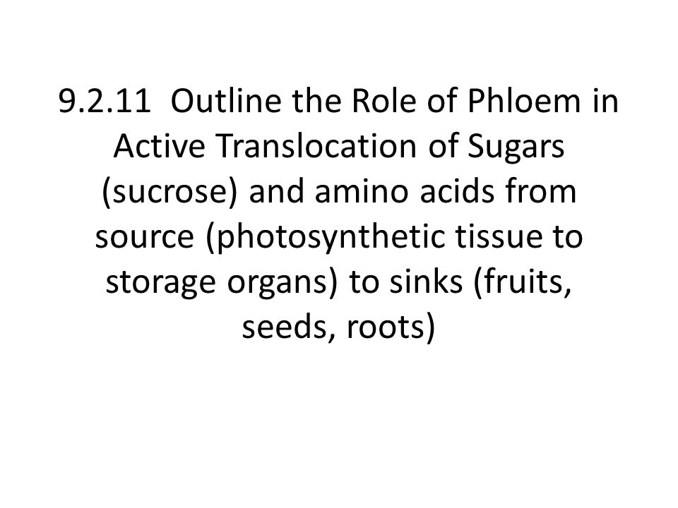 9.2.11 Outline the Role of Phloem in Active Translocation of Sugars (sucrose) and amino acids from source (photosynthetic tissue to storage organs) to