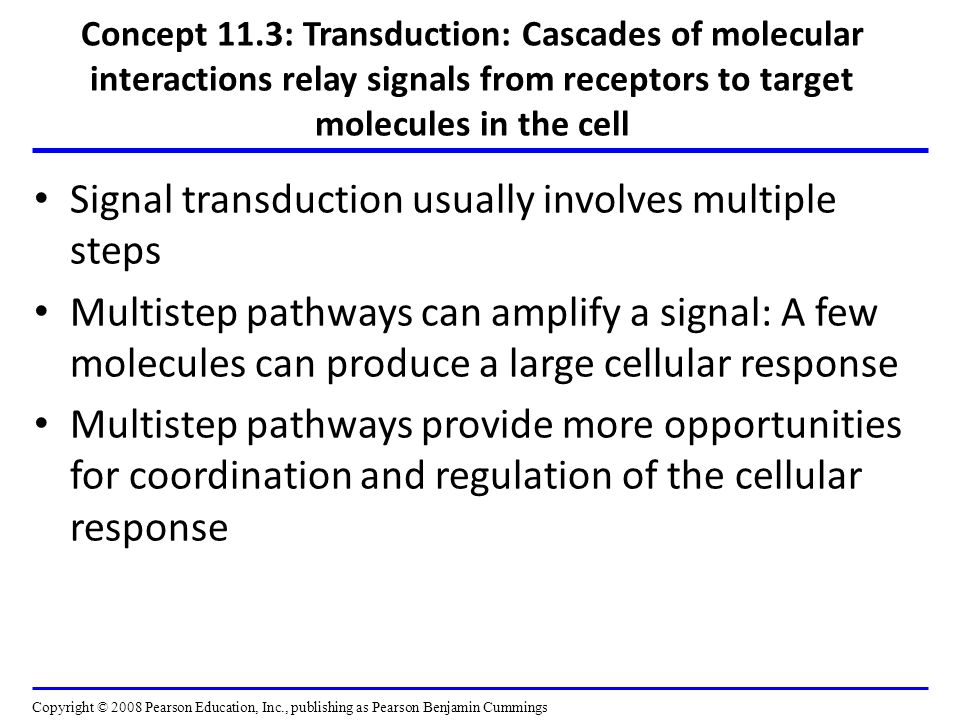 Concept 11.3: Transduction: Cascades of molecular interactions relay signals from receptors to target molecules in the cell Signal transduction usually involves multiple steps Multistep pathways can amplify a signal: A few molecules can produce a large cellular response Multistep pathways provide more opportunities for coordination and regulation of the cellular response Copyright © 2008 Pearson Education, Inc., publishing as Pearson Benjamin Cummings