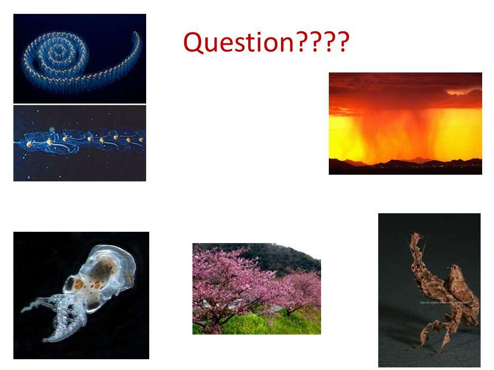 Question????