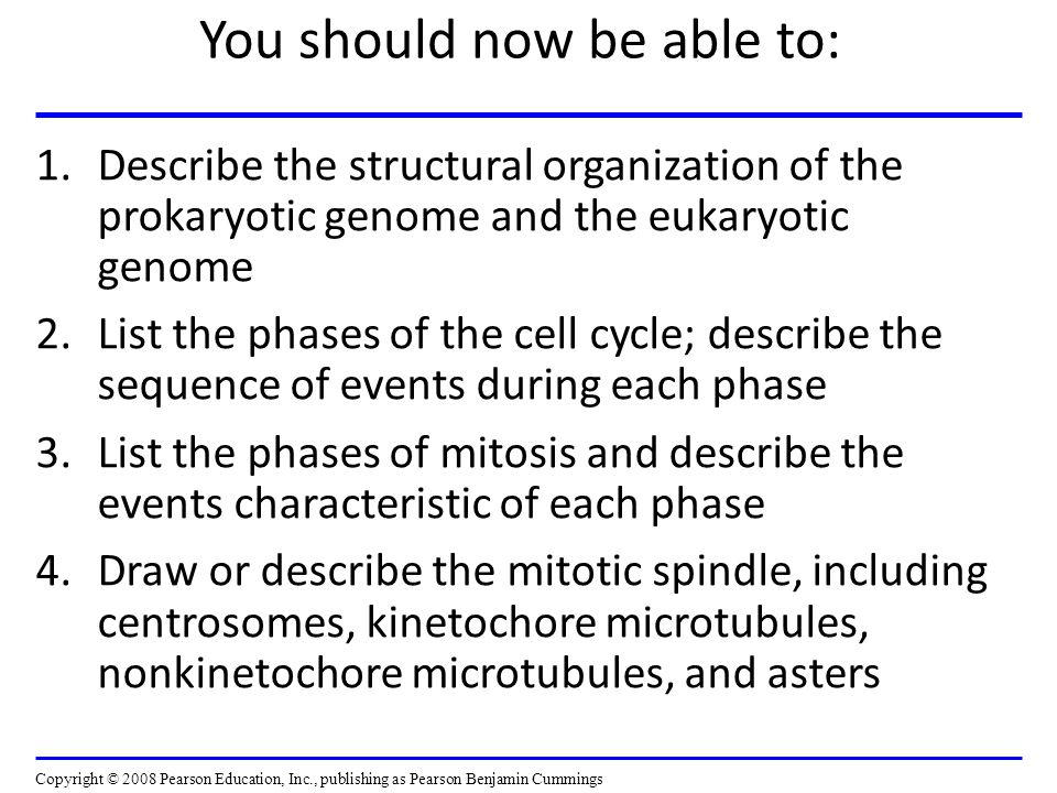 You should now be able to: 1.Describe the structural organization of the prokaryotic genome and the eukaryotic genome 2.List the phases of the cell cycle; describe the sequence of events during each phase 3.List the phases of mitosis and describe the events characteristic of each phase 4.Draw or describe the mitotic spindle, including centrosomes, kinetochore microtubules, nonkinetochore microtubules, and asters Copyright © 2008 Pearson Education, Inc., publishing as Pearson Benjamin Cummings