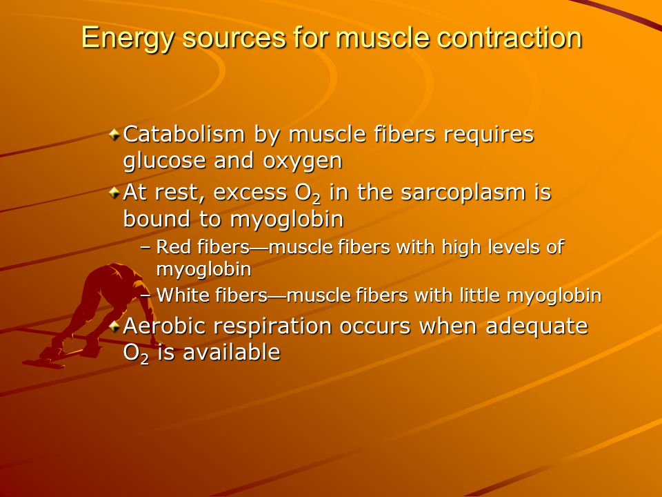 Energy sources for muscle contraction Catabolism by muscle fibers requires glucose and oxygen At rest, excess O 2 in the sarcoplasm is bound to myoglo