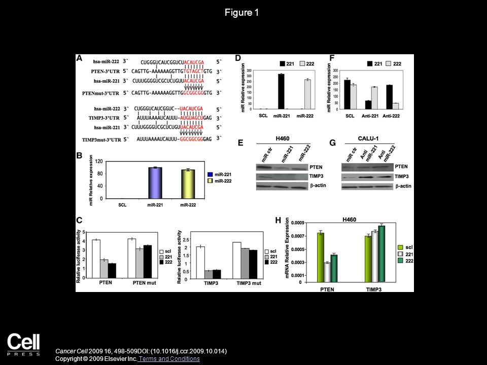 Figure 2 Cancer Cell 2009 16, 498-509DOI: (10.1016/j.ccr.2009.10.014) Copyright © 2009 Elsevier Inc.