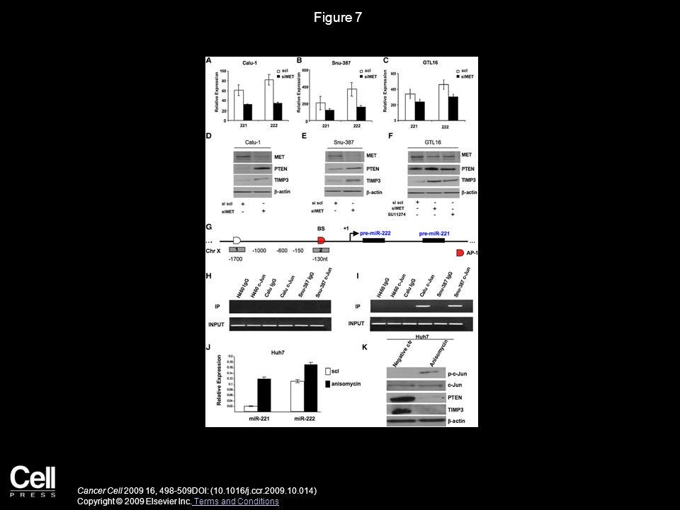 Figure 8 Cancer Cell 2009 16, 498-509DOI: (10.1016/j.ccr.2009.10.014) Copyright © 2009 Elsevier Inc.