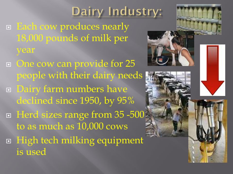  Each cow produces nearly 18,000 pounds of milk per year  One cow can provide for 25 people with their dairy needs  Dairy farm numbers have declined since 1950, by 95%  Herd sizes range from 35 -500 to as much as 10,000 cows  High tech milking equipment is used