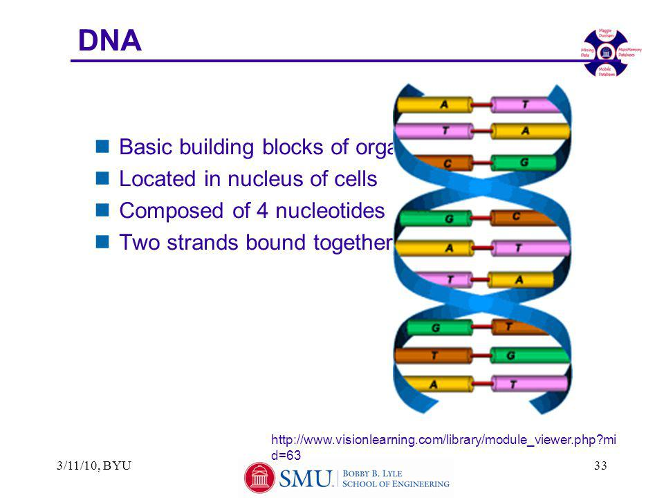DNA nBasic building blocks of organisms nLocated in nucleus of cells nComposed of 4 nucleotides nTwo strands bound together 3/11/10, BYU33 http://www.visionlearning.com/library/module_viewer.php?mi d=63