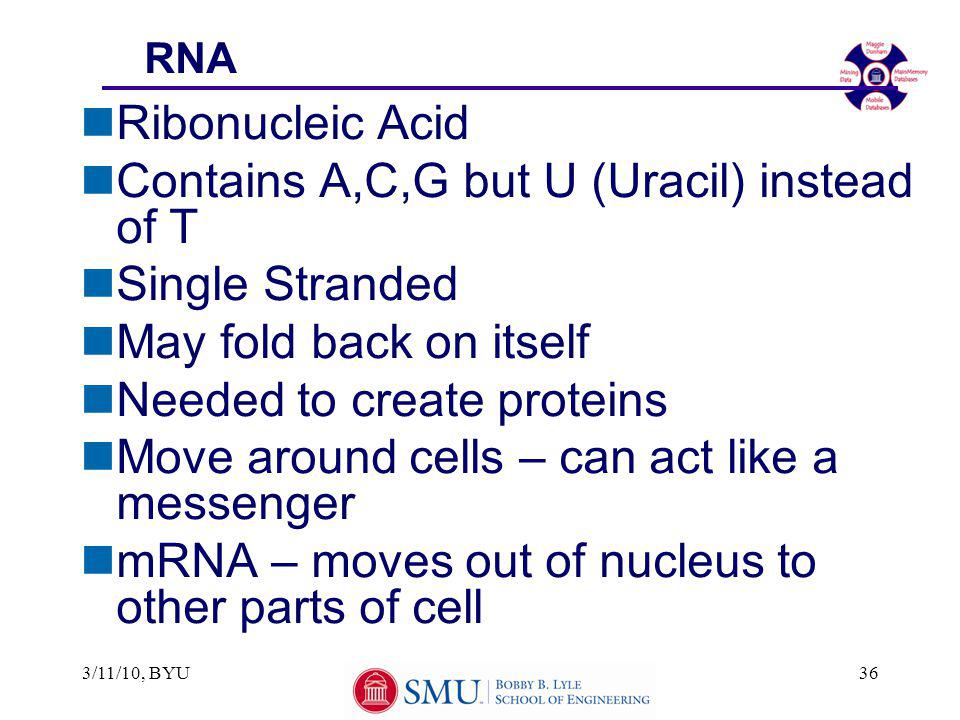 3/11/10, BYU36 RNA nRibonucleic Acid nContains A,C,G but U (Uracil) instead of T nSingle Stranded nMay fold back on itself nNeeded to create proteins