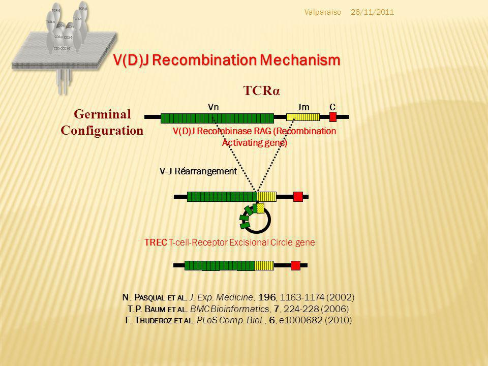 V(D)J Recombination Mechanism Germinal Configuration Jm C Vn TCRα V-J Réarrangement V(D)J Recombinase RAG (Recombination Activating gene) TREC T-cell-Receptor Excisional Circle gene N.