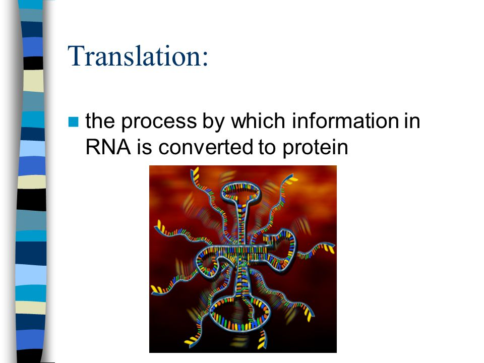 Translation: the process by which information in RNA is converted to protein