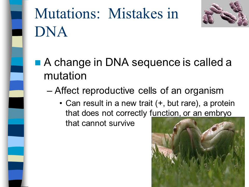 Mutations: Mistakes in DNA A change in DNA sequence is called a mutation –Affect reproductive cells of an organism Can result in a new trait (+, but rare), a protein that does not correctly function, or an embryo that cannot survive
