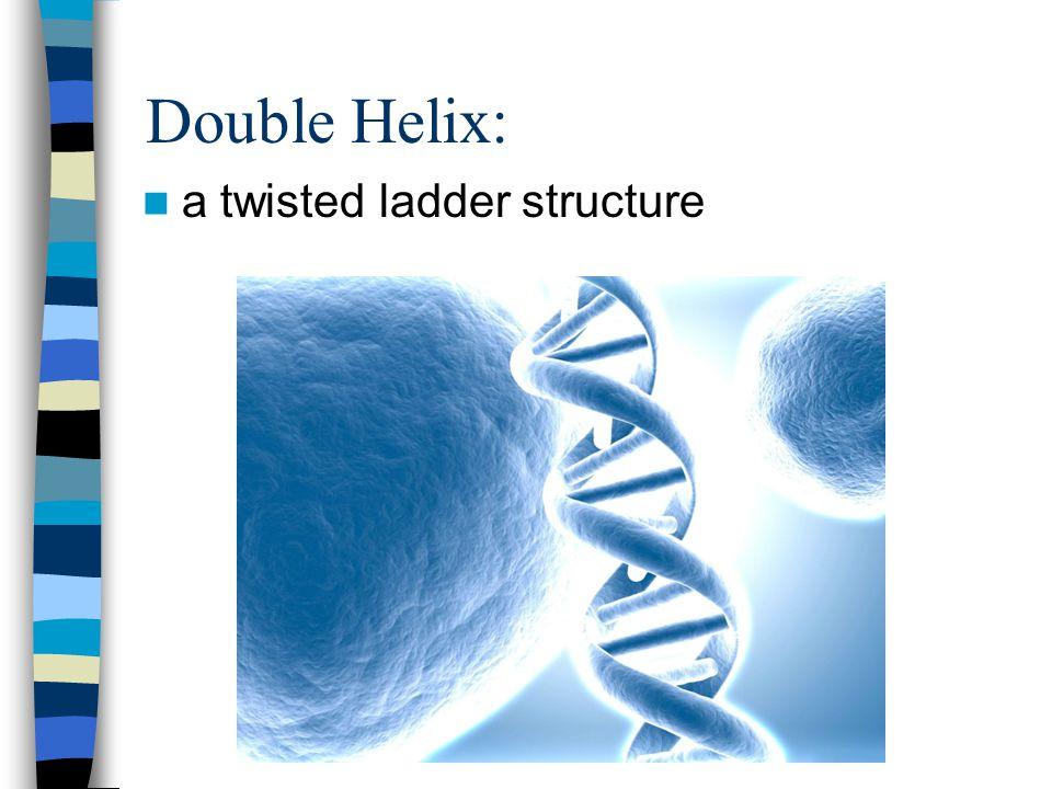 RNA: Ribonucleic acid, three types, messenger, transfer and ribosomal