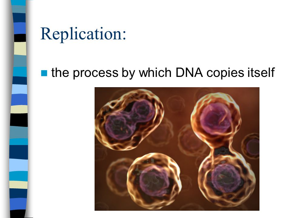 Mutation: a change in DNA that results in an altered trait