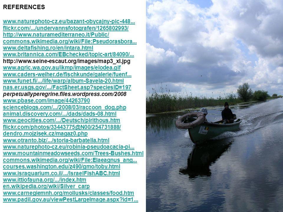 REFERENCES www.naturephoto-cz.eu/bazant-obycajny-pic-448...