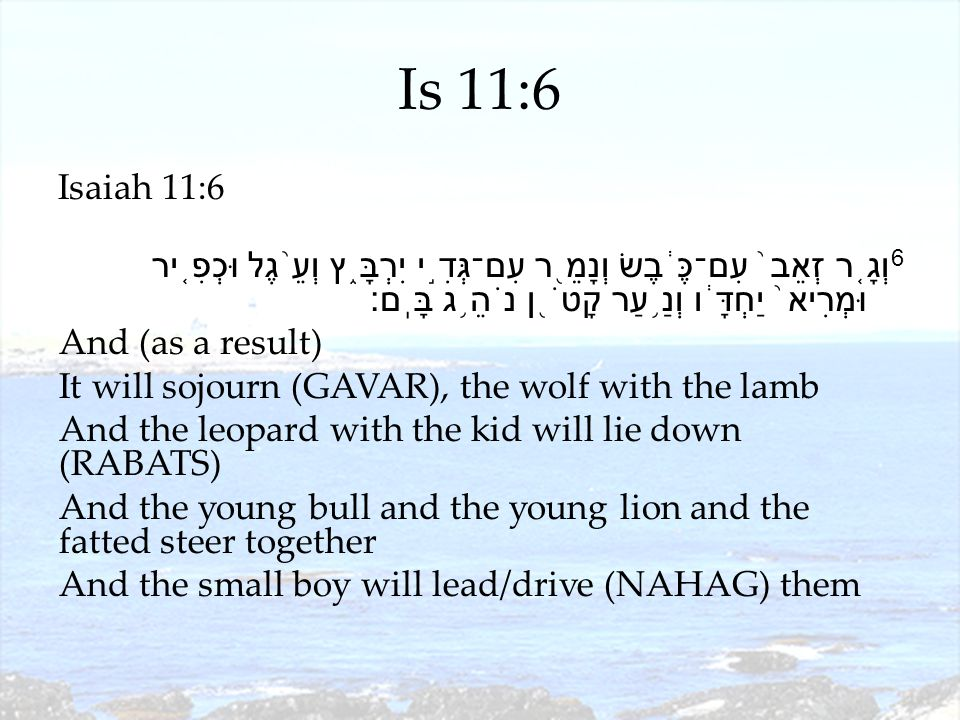 Is 11:6 Isaiah 11:6 6 וְגָ ֤ ר זְאֵב ֙ עִם־כֶּ ֔ בֶשׂ וְנָמֵ ֖ ר עִם־גְּדִ ֣ י יִרְבָּ ֑ ץ וְעֵ ֨ גֶל וּכְפִ ֤ יר וּמְרִיא ֙ יַחְדָּ ֔ ו וְנַ ֥ עַר קָטֹ ֖ ן נֹהֵ ֥ ג בָּֽם׃ And (as a result) It will sojourn (GAVAR), the wolf with the lamb And the leopard with the kid will lie down (RABATS) And the young bull and the young lion and the fatted steer together And the small boy will lead/drive (NAHAG) them