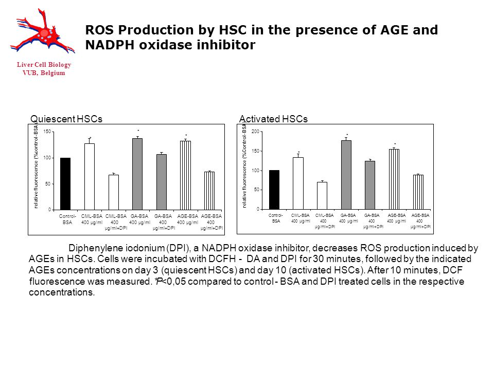 Liver Cell Biology VUB, Belgium ROS Production by HSC in the presence of AGE and NADPH oxidase inhibitor Activated HSCsQuiescent HSCs Diphenylene iodonium (DPI), a NADPH oxidase inhibitor, decreases ROS production induced by AGEs in HSCs.