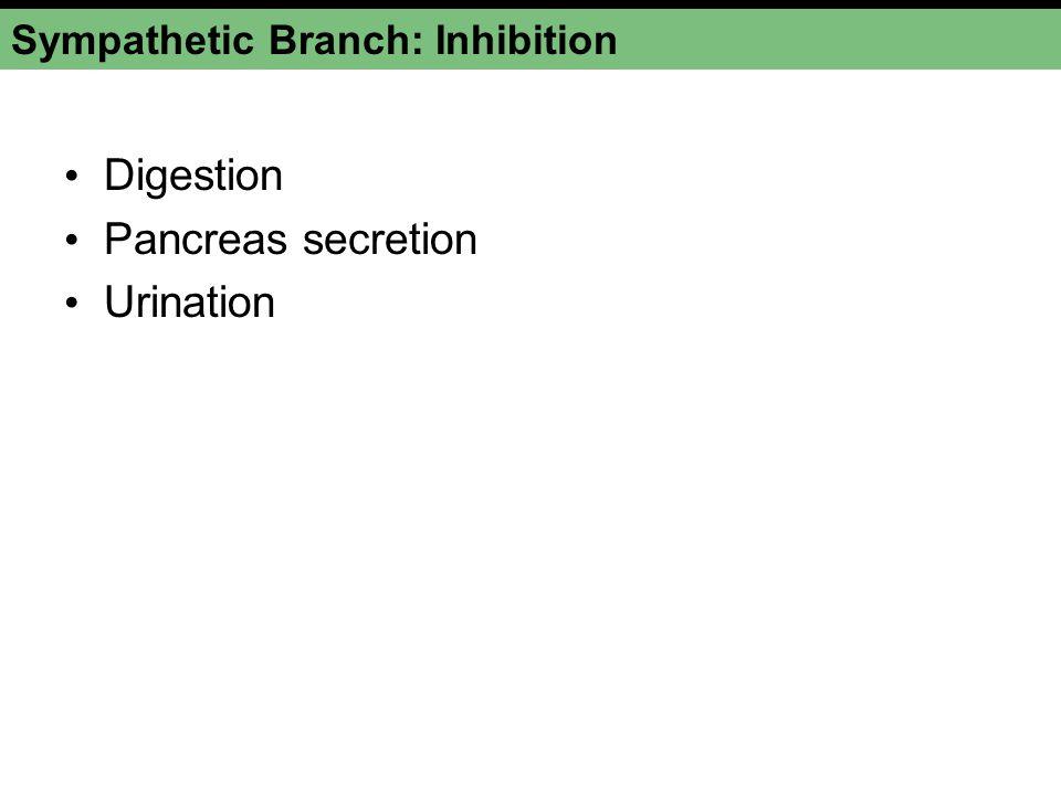 Sympathetic Branch: Inhibition Digestion Pancreas secretion Urination