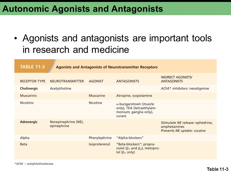 Table 11-3 Autonomic Agonists and Antagonists Agonists and antagonists are important tools in research and medicine