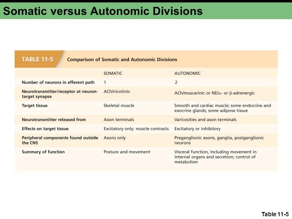 Table 11-5 Somatic versus Autonomic Divisions