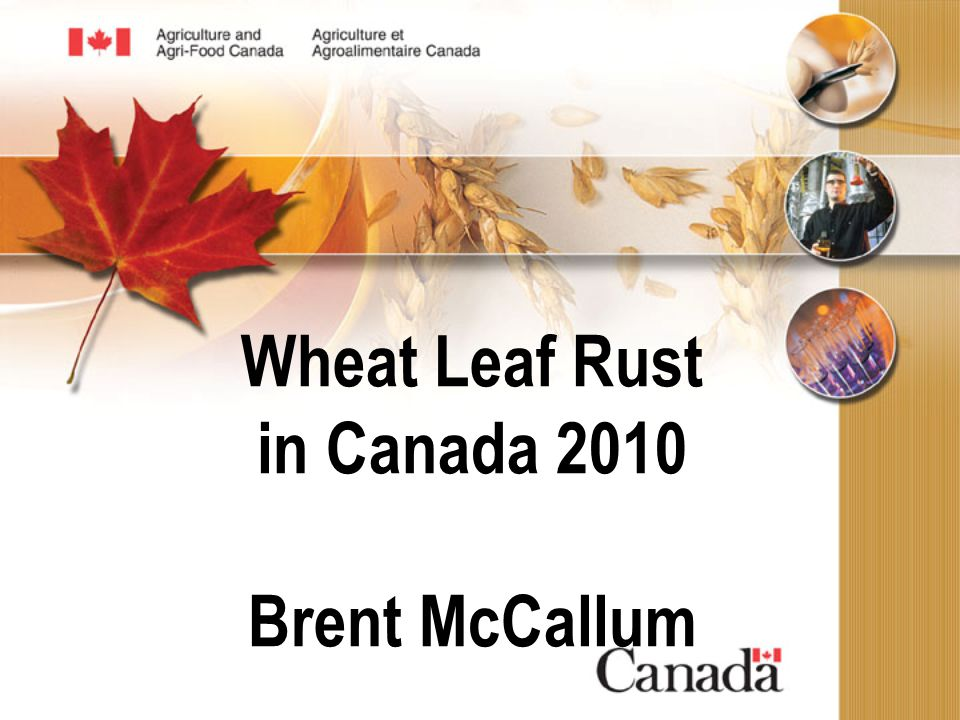 Wheat Leaf Rust in Canada 2010 Brent McCallum