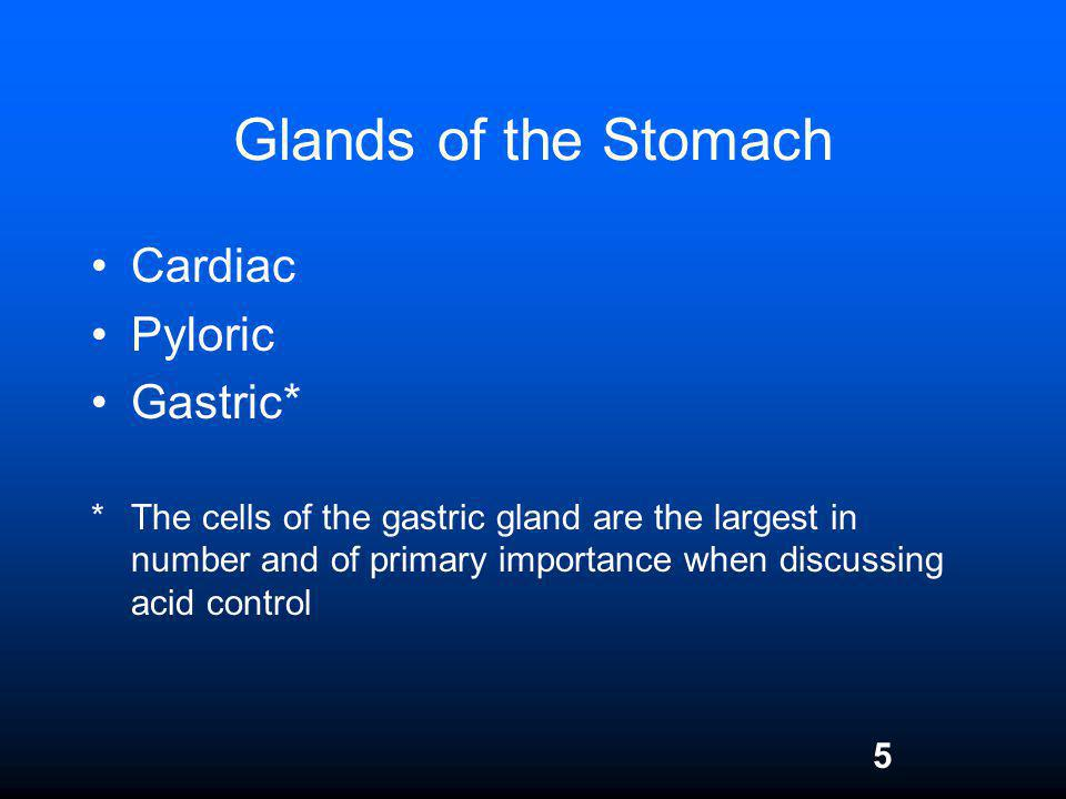 5 Glands of the Stomach Cardiac Pyloric Gastric* *The cells of the gastric gland are the largest in number and of primary importance when discussing a