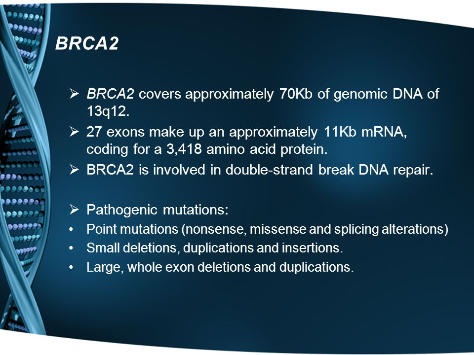 BRCA2  BRCA2 covers approximately 70Kb of genomic DNA of 13q12.  27 exons make up an approximately 11Kb mRNA, coding for a 3,418 amino acid protein.