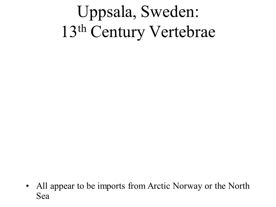 Uppsala, Sweden: 13 th Century Vertebrae All appear to be imports from Arctic Norway or the North Sea