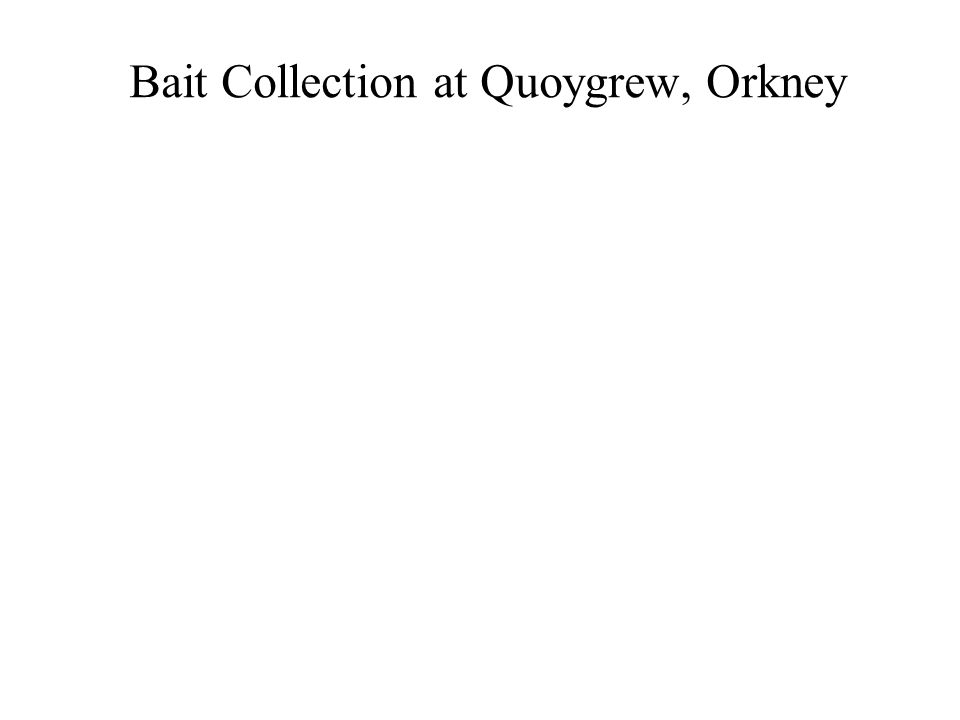 Bait Collection at Quoygrew, Orkney