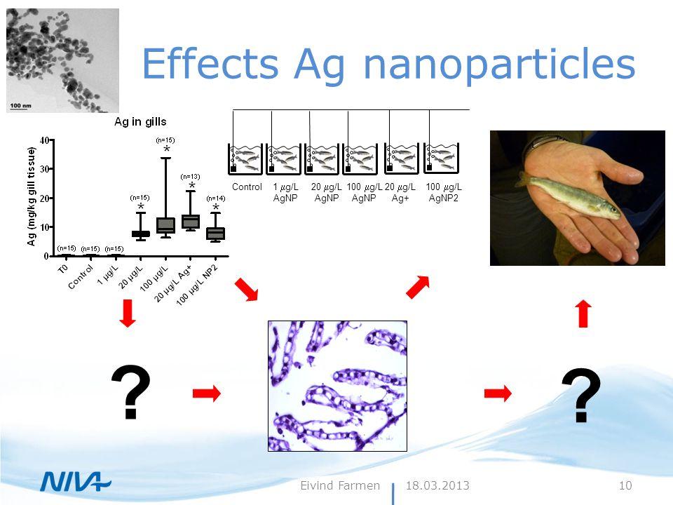 Effects Ag nanoparticles ? ? Control 1  g/L AgNP 20  g/L AgNP 100  g/L AgNP 20  g/L Ag+ 100  g/L AgNP2 18.03.2013Eivind Farmen10