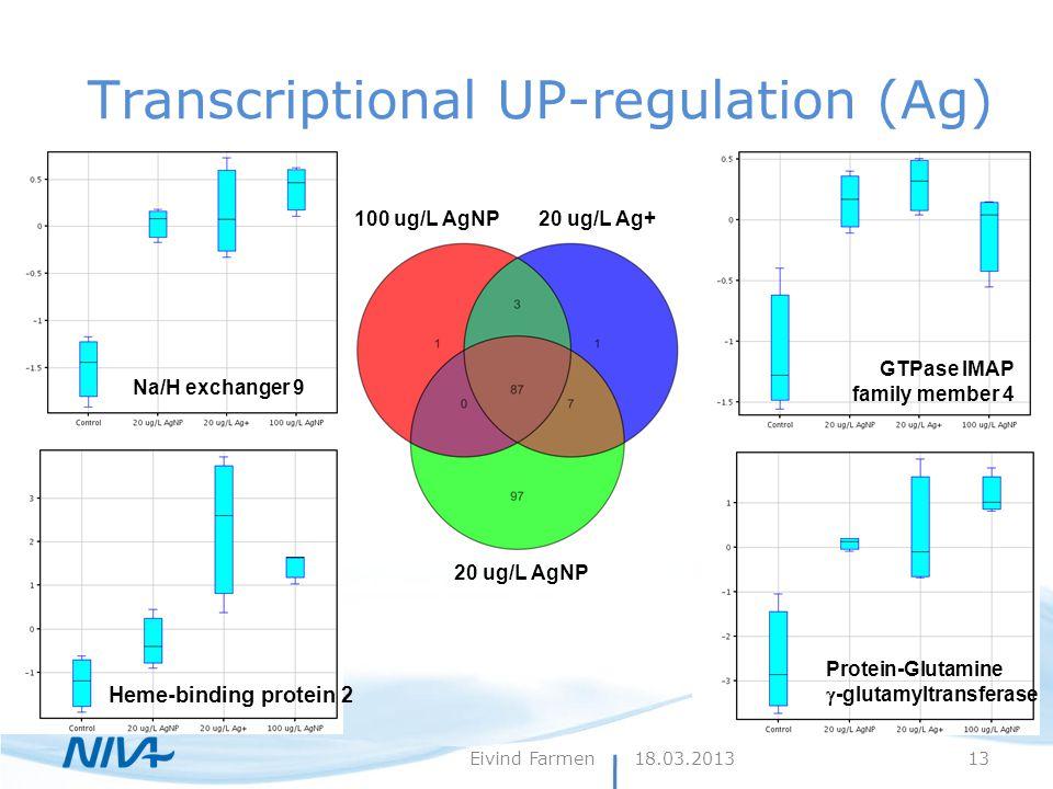 Transcriptional UP-regulation (Ag) 100 ug/L AgNP20 ug/L Ag+ 20 ug/L AgNP Heme-binding protein 2 Protein-Glutamine  -glutamyltransferase GTPase IMAP family member 4 Na/H exchanger 9 18.03.2013Eivind Farmen13