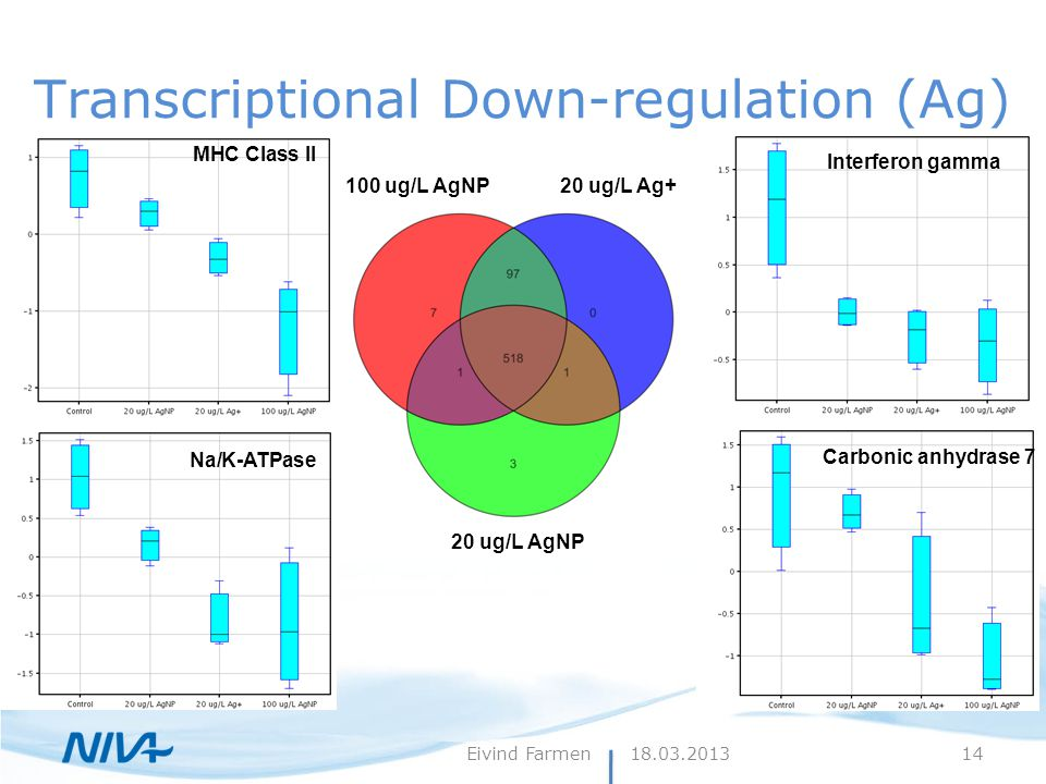 Transcriptional Down-regulation (Ag) 100 ug/L AgNP20 ug/L Ag+ 20 ug/L AgNP Carbonic anhydrase 7 Na/K-ATPase Interferon gamma MHC Class II 18.03.2013Ei