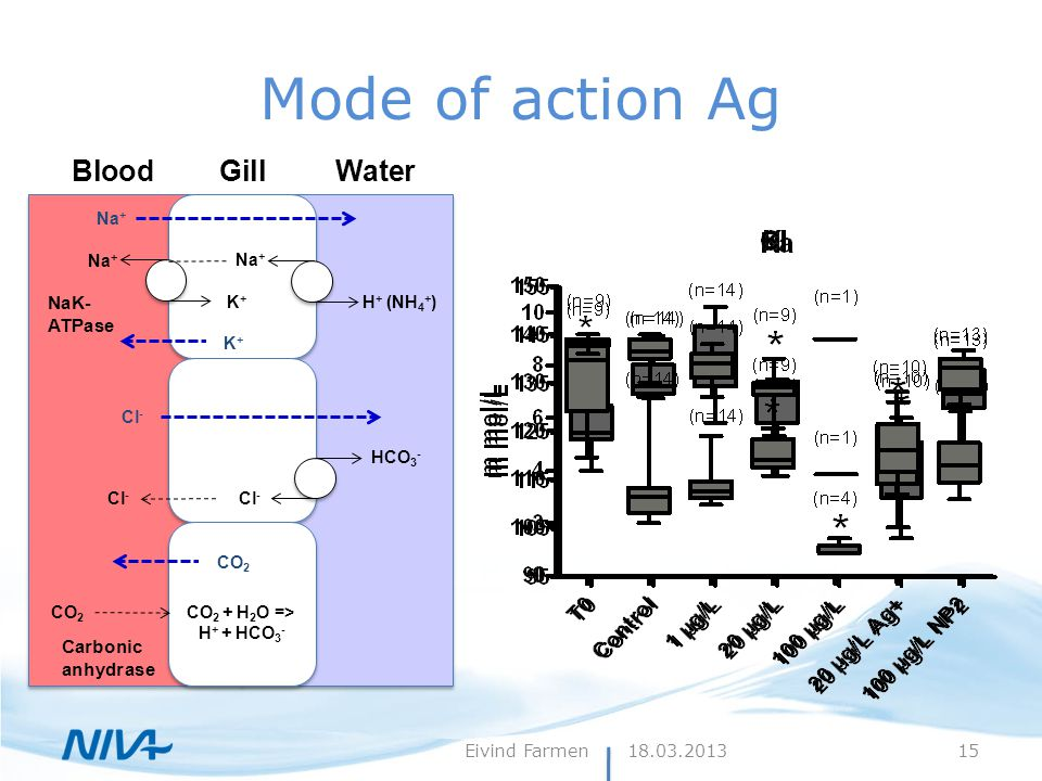 Mode of action Ag BloodGillWater HCO 3 - Cl - NaK- ATPase H + (NH 4 + ) Na + K+K+ Carbonic anhydrase CO 2 + H 2 O => H + + HCO 3 - CO 2 Na + K+K+ Cl -