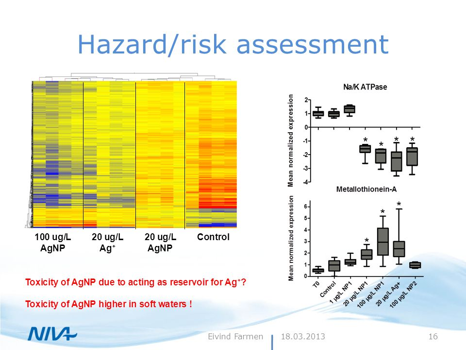 Hazard/risk assessment 100 ug/L AgNP 20 ug/L Ag + 20 ug/L AgNP Control Toxicity of AgNP due to acting as reservoir for Ag + .