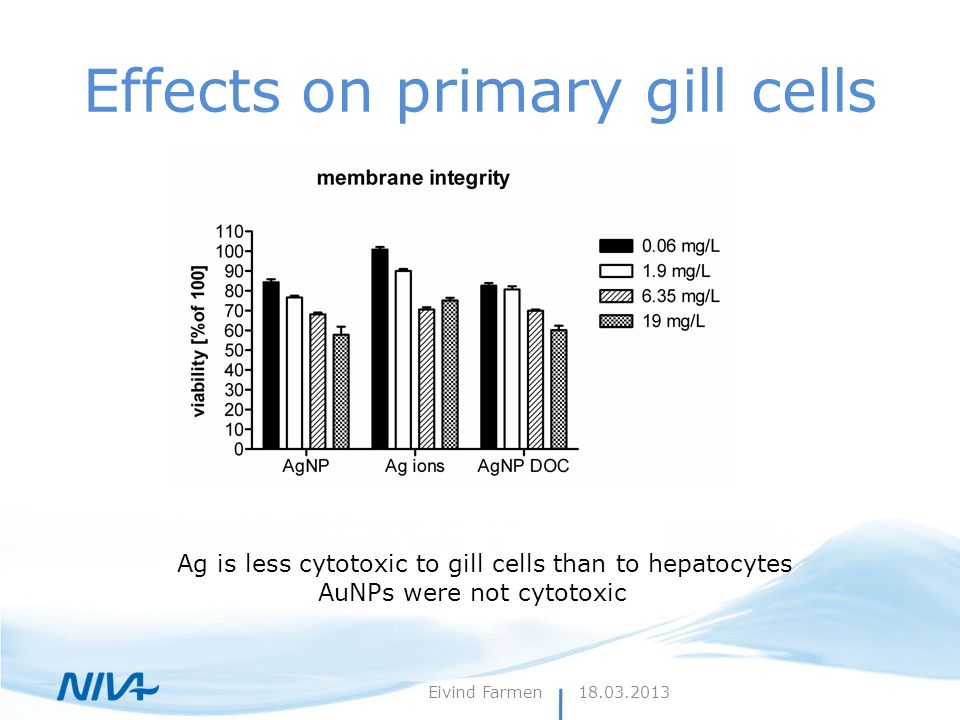 Effects on primary gill cells Ag is less cytotoxic to gill cells than to hepatocytes AuNPs were not cytotoxic 18.03.2013Eivind Farmen