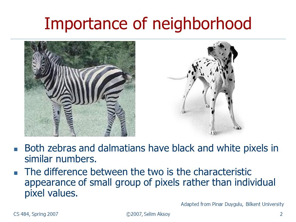 CS 484, Spring 2007©2007, Selim Aksoy2 Importance of neighborhood Both zebras and dalmatians have black and white pixels in similar numbers.