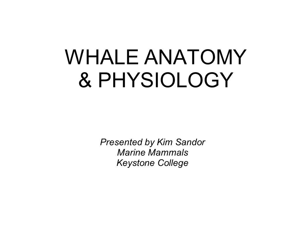 WHALE ANATOMY & PHYSIOLOGY Presented by Kim Sandor Marine Mammals Keystone College