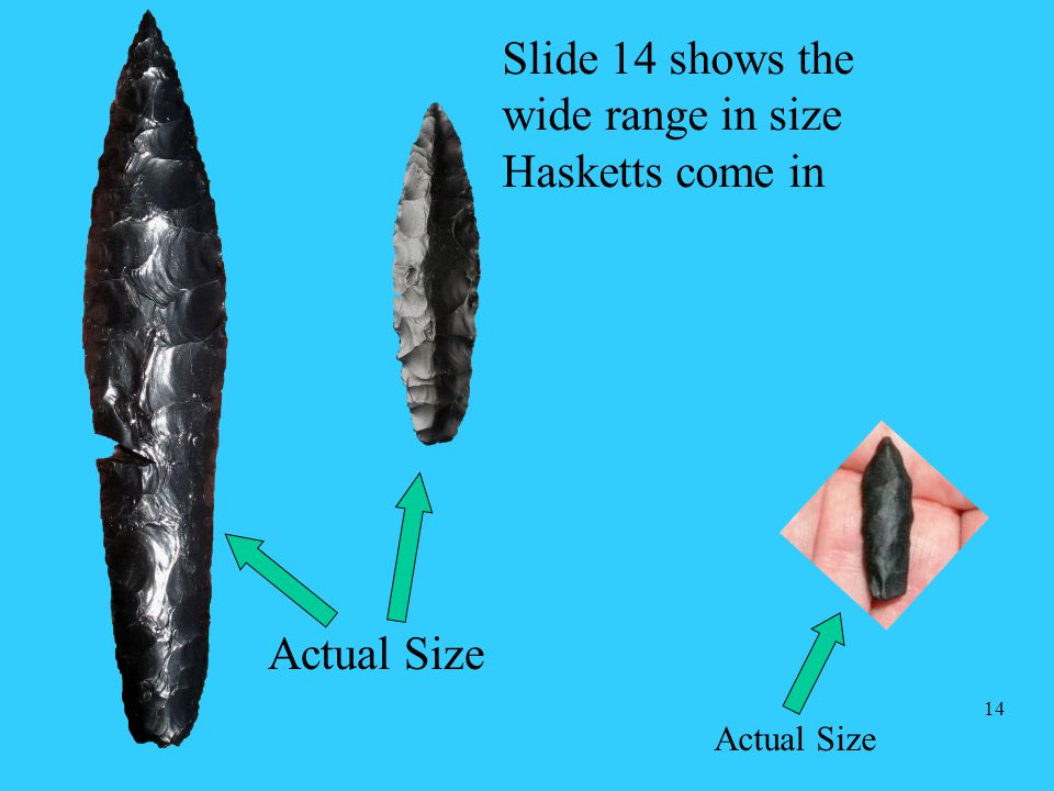 Slide 14 shows the wide range in size Hasketts come in Actual Size 14