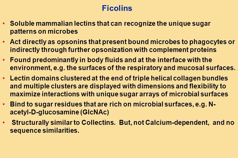 Ficolins Soluble mammalian lectins that can recognize the unique sugar patterns on microbes Act directly as opsonins that present bound microbes to phagocytes or indirectly through further opsonization with complement proteins Found predominantly in body fluids and at the interface with the environment, e.g.