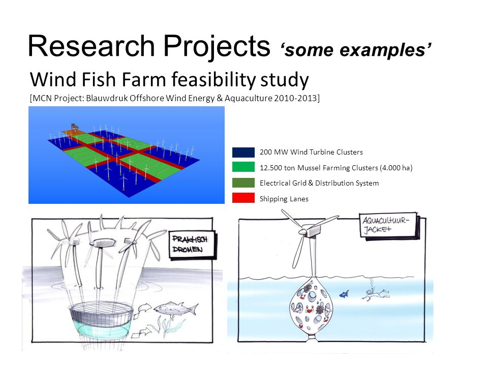 Research Projects 'some examples' Wind Fish Farm feasibility study [MCN Project: Blauwdruk Offshore Wind Energy & Aquaculture 2010-2013] 200 MW Wind Turbine Clusters 12.500 ton Mussel Farming Clusters (4.000 ha) Electrical Grid & Distribution System Shipping Lanes