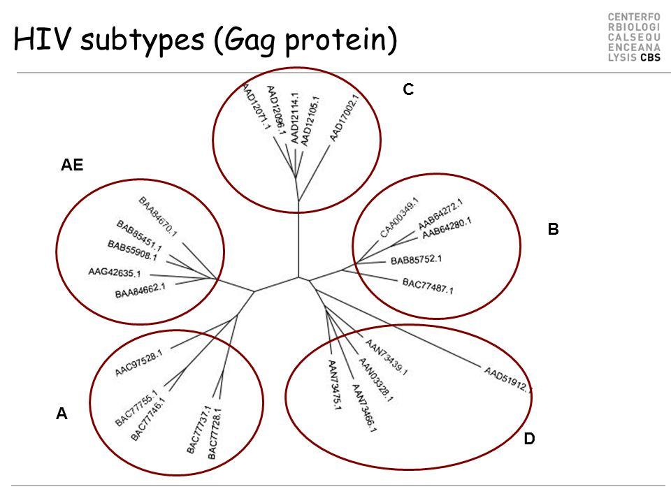 HIV subtypes (Gag protein) C B AE A D