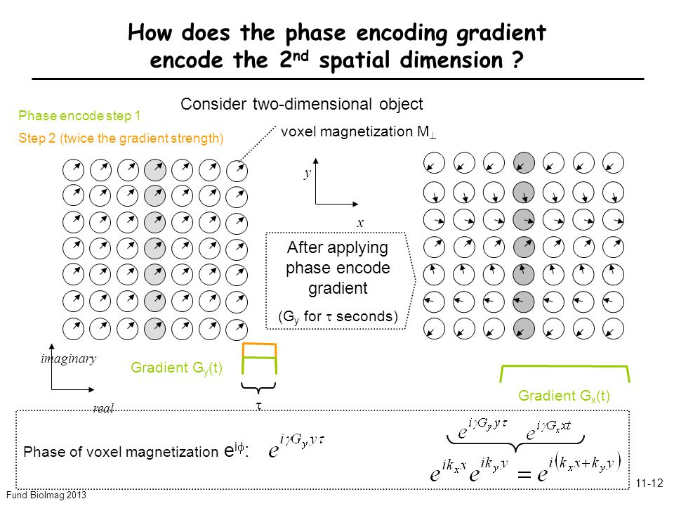 Fund BioImag 2013 11-12 Phase encode step 1 Step 2 (twice the gradient strength) Gradient G y (t) Gradient G x (t) Phase of voxel magnetization e i  : y x imaginary real How does the phase encoding gradient encode the 2 nd spatial dimension .
