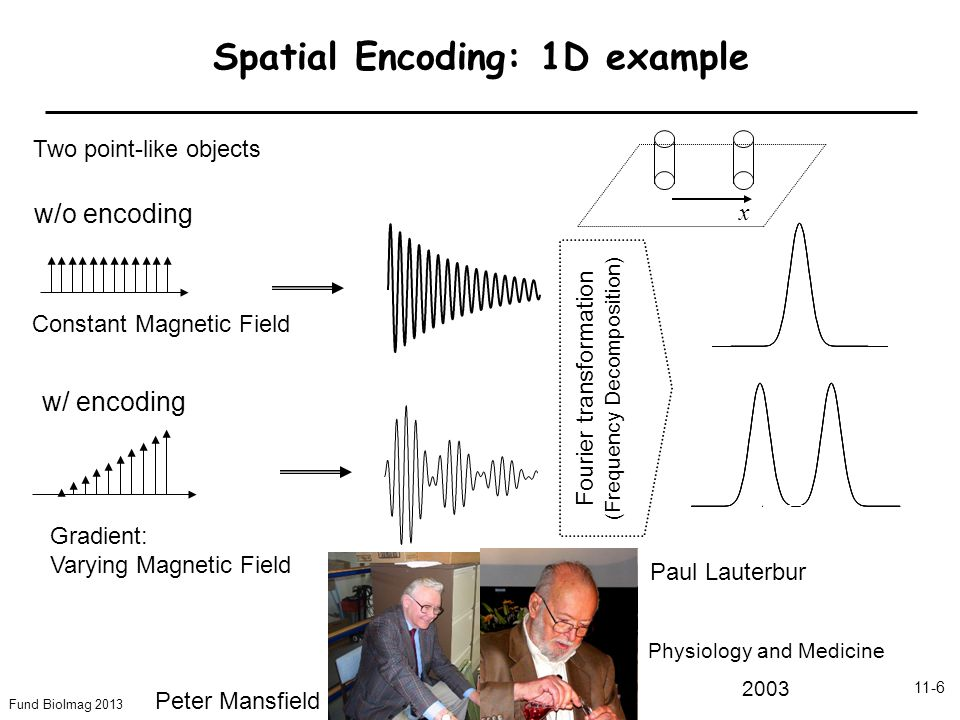 Fund BioImag 2013 11-6 Spatial Encoding: 1D example w/o encoding w/ encoding Constant Magnetic Field Gradient: Varying Magnetic Field Fourier transformation (Frequency Decomposition) Paul Lauterbur Peter Mansfield Physiology and Medicine 2003 Two point-like objects x