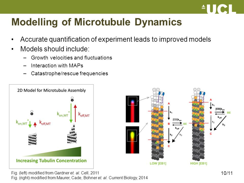 Modelling of Microtubule Dynamics Accurate quantification of experiment leads to improved models Models should include: –Growth velocities and fluctua