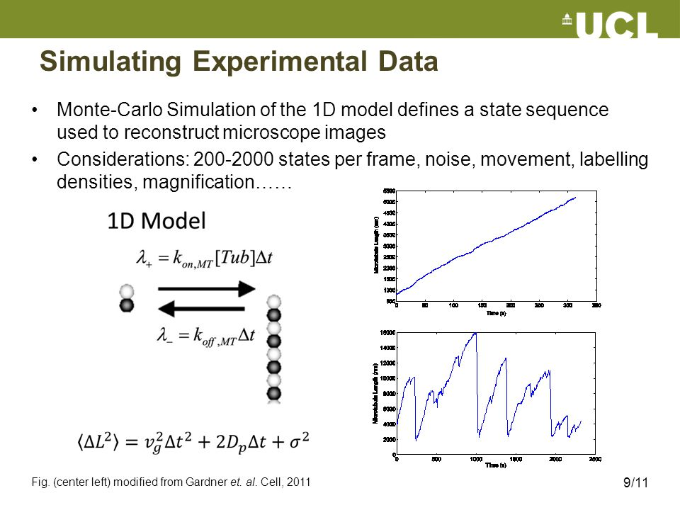 Simulating Experimental Data Monte-Carlo Simulation of the 1D model defines a state sequence used to reconstruct microscope images Considerations: 200