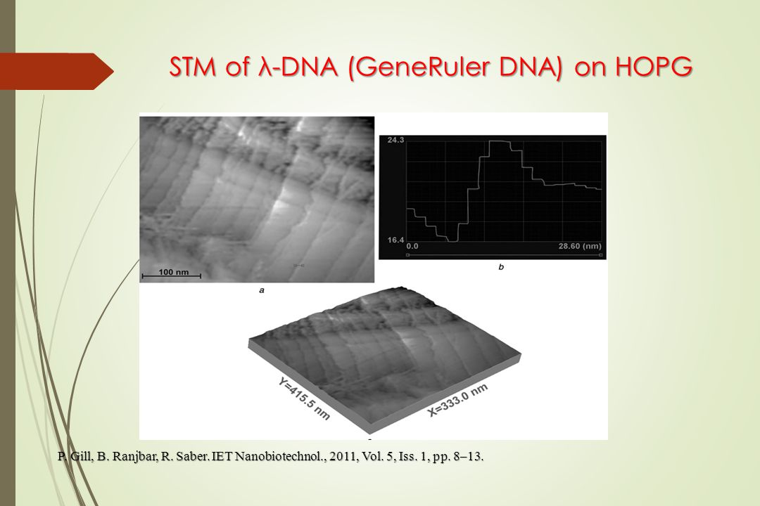 STM of λ-DNA (GeneRuler DNA) on HOPG P. Gill, B. Ranjbar, R.