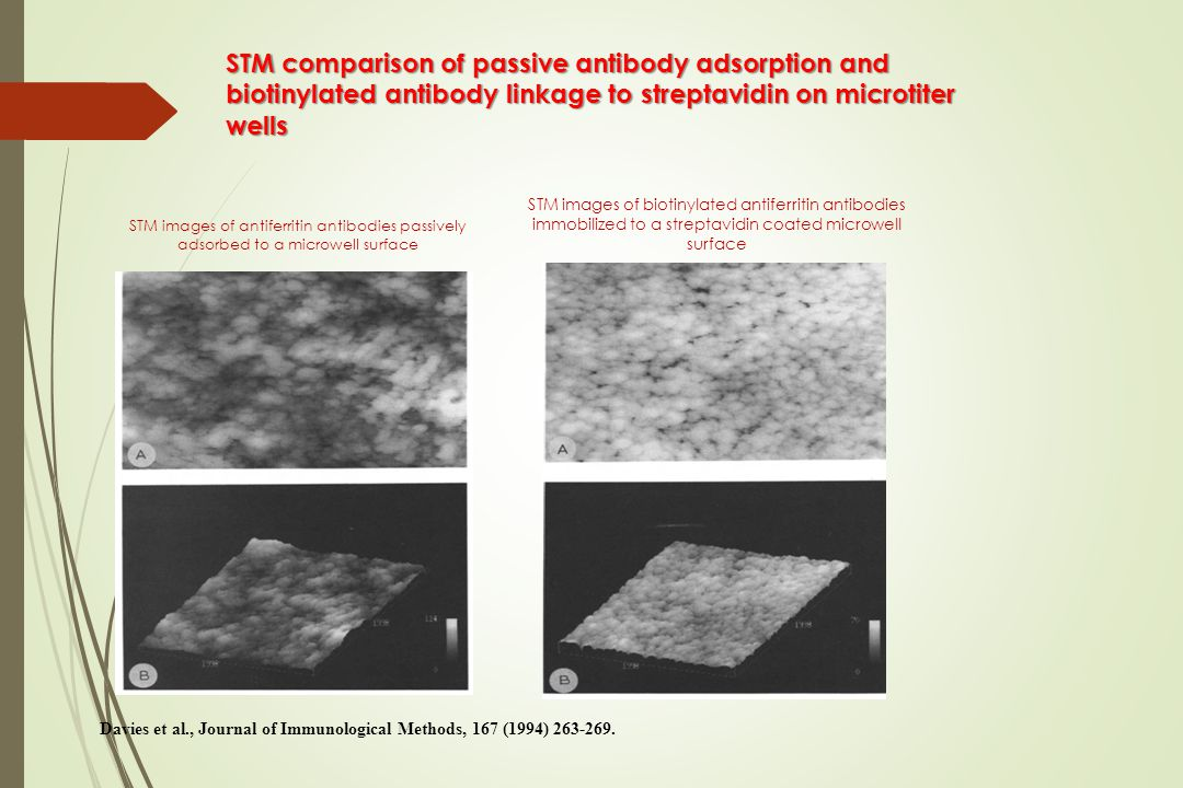 STM comparison of passive antibody adsorption and biotinylated antibody linkage to streptavidin on microtiter wells STM images of antiferritin antibodies passively adsorbed to a microwell surface STM images of biotinylated antiferritin antibodies immobilized to a streptavidin coated microwell surface Davies et al., Journal of Immunological Methods, 167 (1994) 263-269.