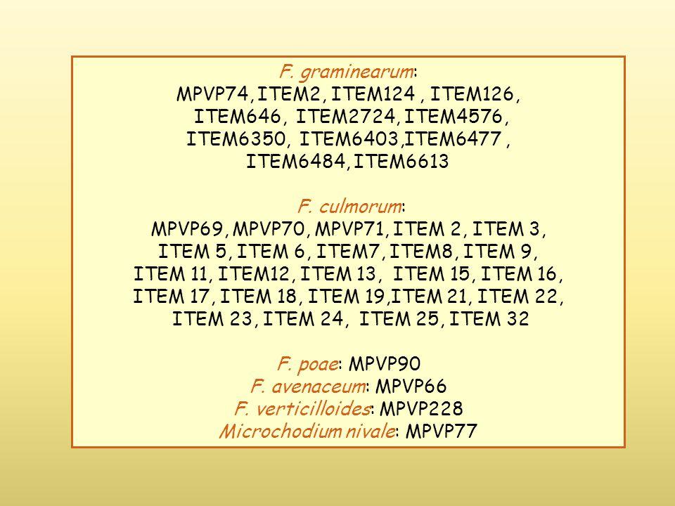 F. graminearum: MPVP74, ITEM2, ITEM124, ITEM126, ITEM646, ITEM2724, ITEM4576, ITEM6350, ITEM6403,ITEM6477, ITEM6484, ITEM6613 F. culmorum: MPVP69, MPV