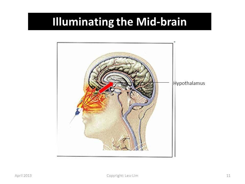 April 2013Copyright: Lew Lim11 Illuminating the Mid-brain Hypothalamus