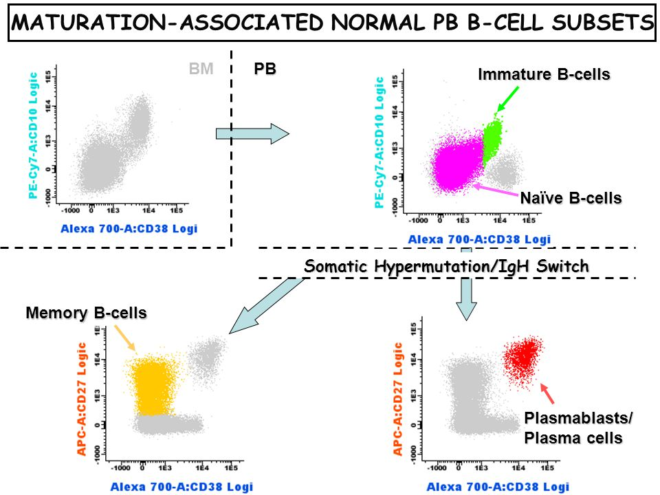 Memory B-cells Somatic Hypermutation/IgH Switch Naïve B-cells Immature B-cells BMPB MATURATION-ASSOCIATED NORMAL PB B-CELL SUBSETSPlasmablasts/ Plasma