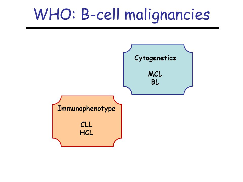 WHO: B-cell malignancies Cytogenetics MCL BL Immunophenotype CLL HCL