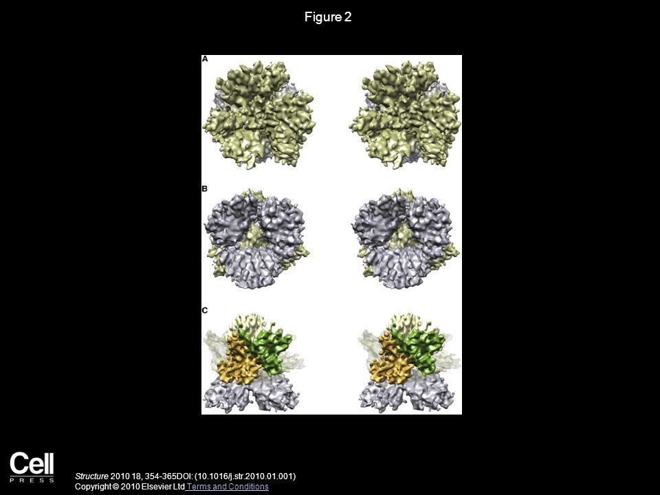 Figure 2 Structure 2010 18, 354-365DOI: (10.1016/j.str.2010.01.001) Copyright © 2010 Elsevier Ltd Terms and Conditions Terms and Conditions